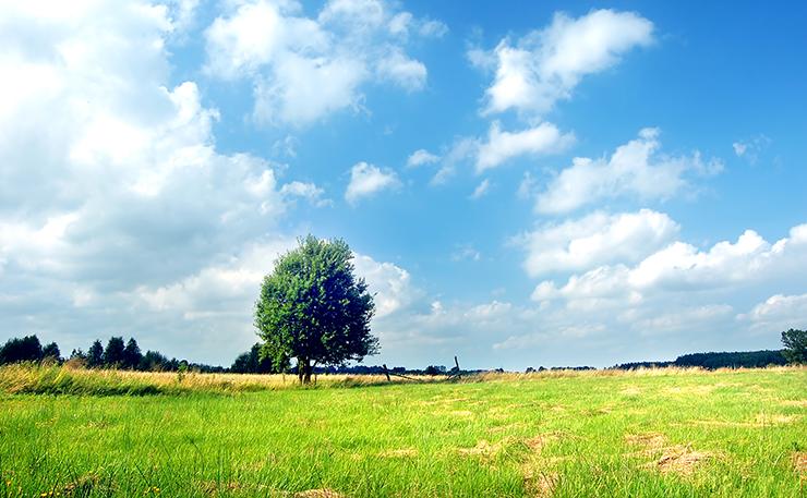Qué analizar antes de comprar un campo